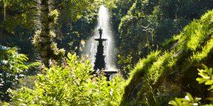 A exuberante natureza do Jardim Botânico manda seu abraço ao seu mais entusiasmado frequentador - Foto: Carlos Monteiro TOM Jobim