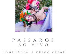 Capa do CD 'Pássaros ao Vivo', do Duo Gisbranco